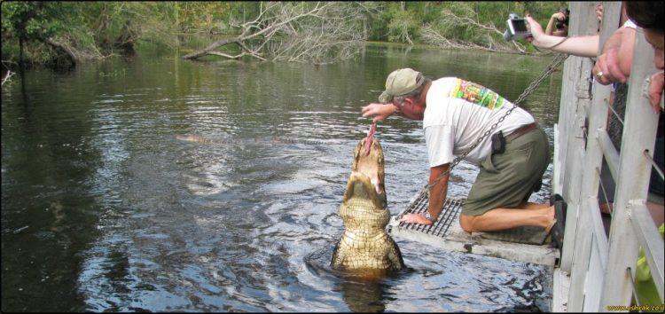 סיור ביצות בניו אורלינס swamp tour New orleans