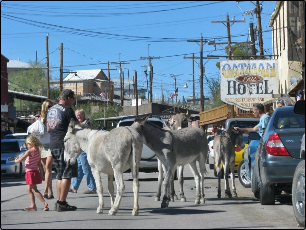 Donkeys in Otman Arizona | חמורים באוטמן אריזונה