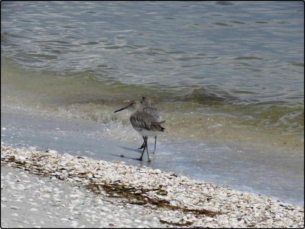 פלורידה - סניבל | Florida - Sanibel Island