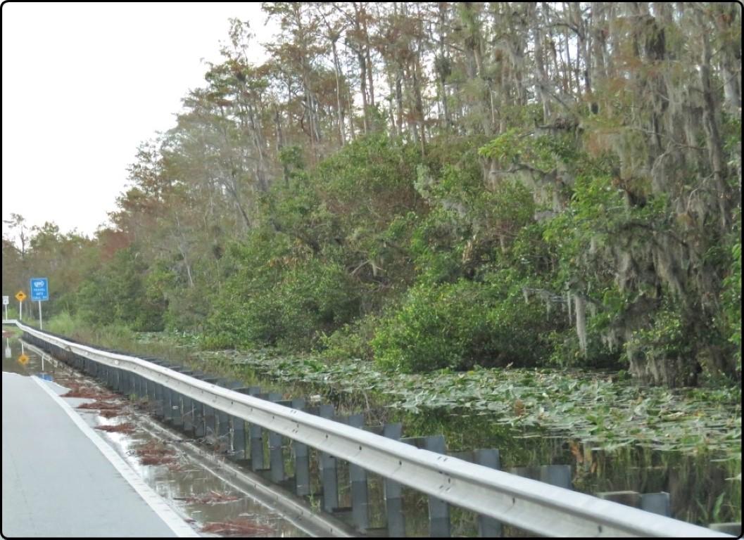 פלורידה - Tamiami Trail מים על הכביש