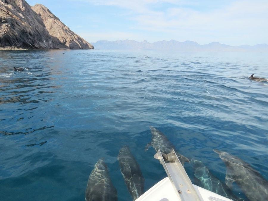 על המזוודות - באחה קליפורניה עם ילדים שייט דולפינים Loreto Baja California