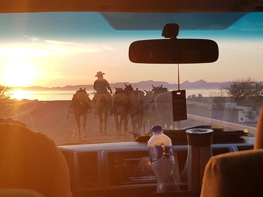 על המזוודות - באחה קליפורניה עם ילדים - טיול סוסים Tierra Marina Tours