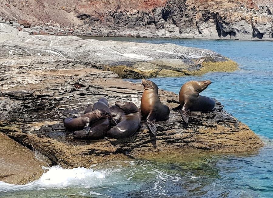 אושרה קמחי - מקסיקו עם ילדים - שייט חופים בלורטו Loreto Baja California Sur