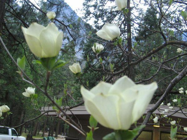 פארק לאומי בארצות הברית - יוסמיטי - אושרה קמחי